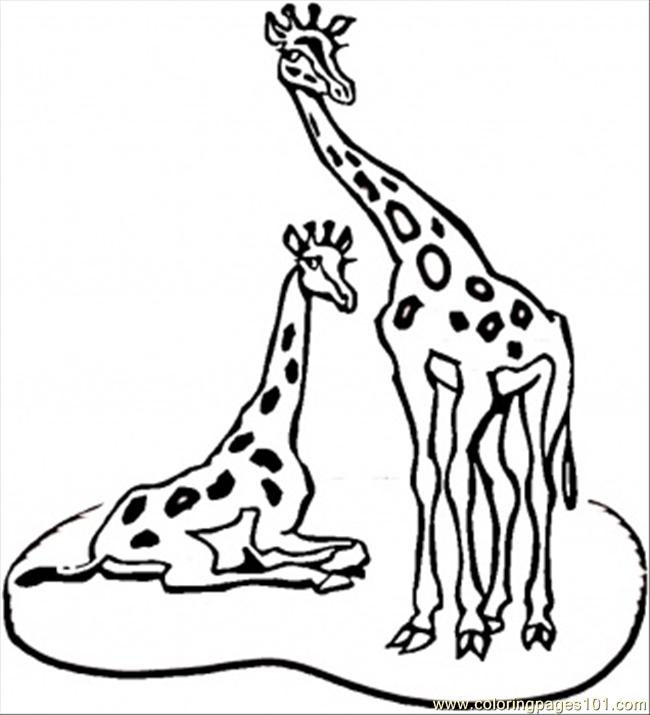 Giraffes Coloring Page Free Africa