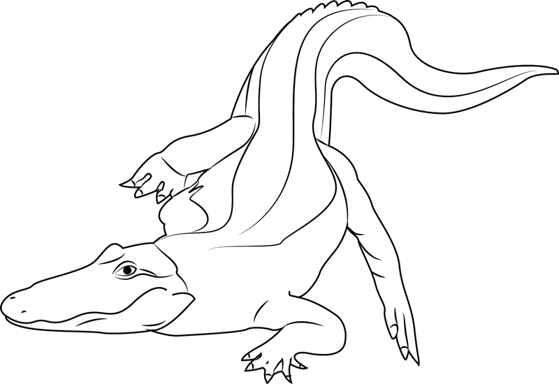 Albino Baby Alligator Coloring Page