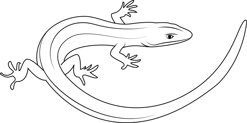 Baby Alligator Coloring Page Free Alligator Coloring