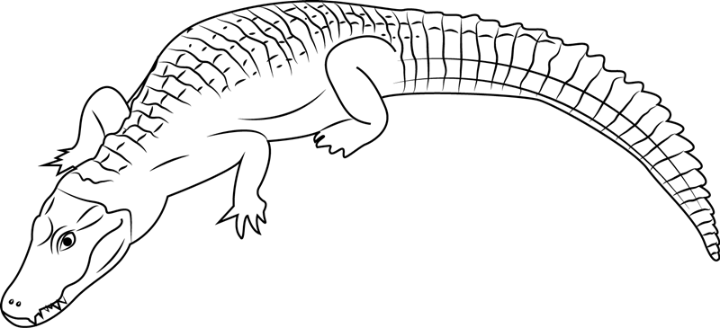 Cuvier S Caiman Coloring Page Free Alligator Coloring