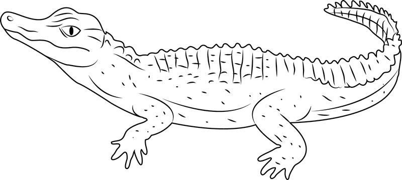 schneiders alligator coloring page
