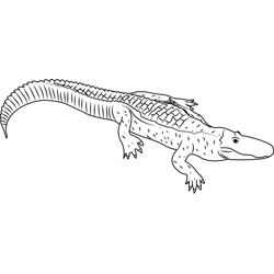 Albino Alligator Free Coloring Page for Kids