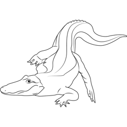 Albino Baby Alligator Free Coloring Page for Kids