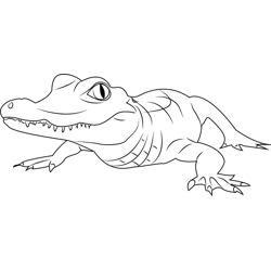 Alligator Free Coloring Page for Kids
