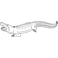 Alligator Open Mouth Free Coloring Page for Kids