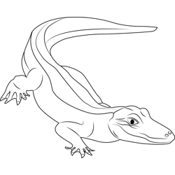 American Alligator Free Coloring Page for Kids