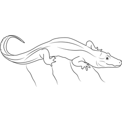 Big Chinese Alligator Free Coloring Page for Kids