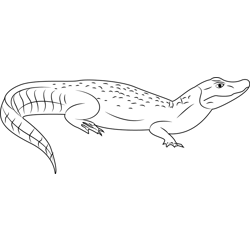 Broad Snouted Caiman Free Coloring Page for Kids