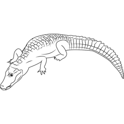 Cuvier's Caiman Free Coloring Page for Kids