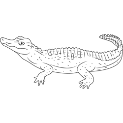Schneider's Alligator Free Coloring Page for Kids