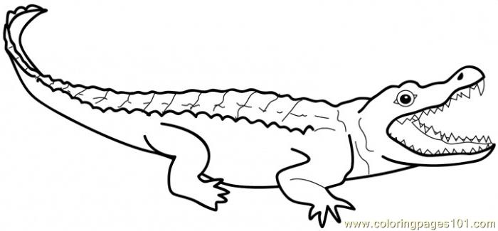 alligators coloring page - Alligator Coloring Page