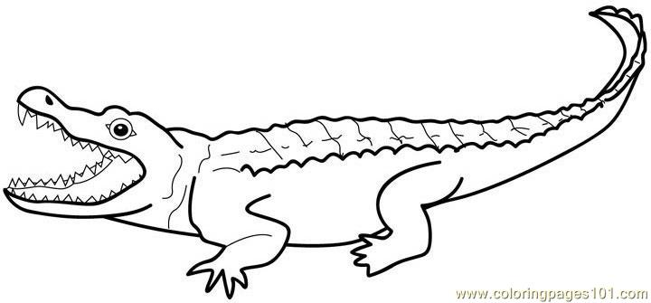 alligators coloring page