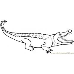 Alligators Free Coloring Page for Kids