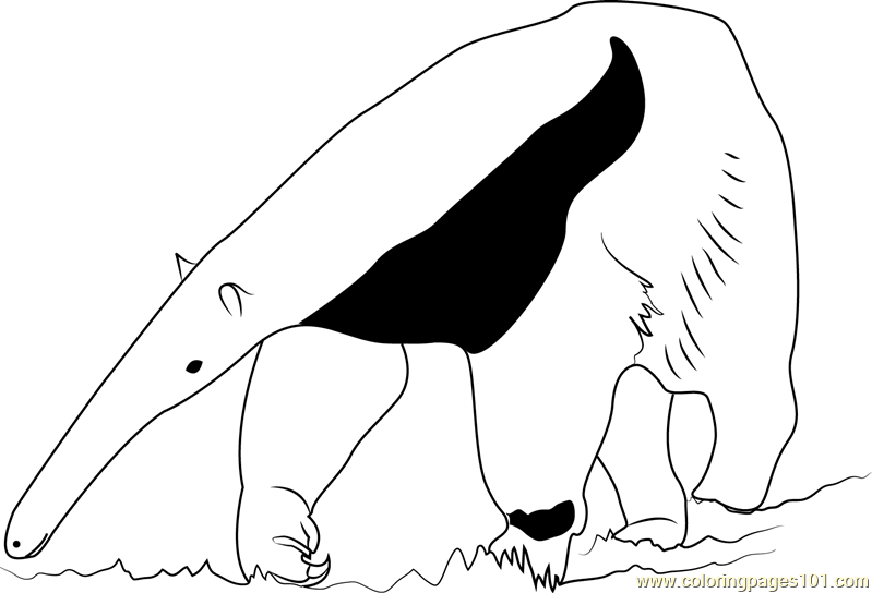 Ant Bear Coloring Page