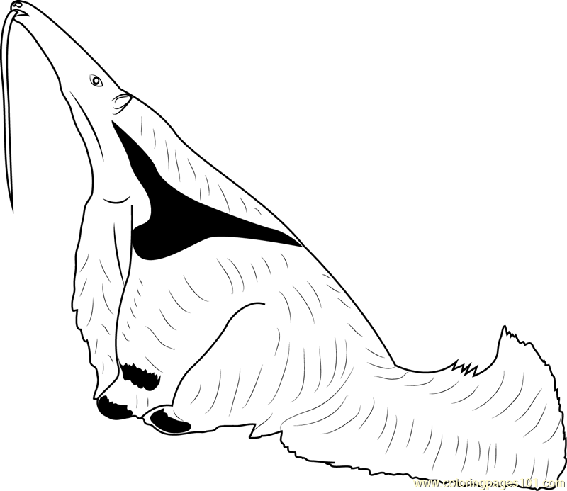 Anteater Searching Ants Coloring Page - Free Anteater ...