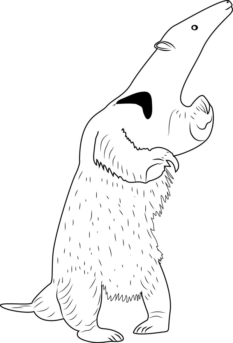 Anteater Standing Coloring Page