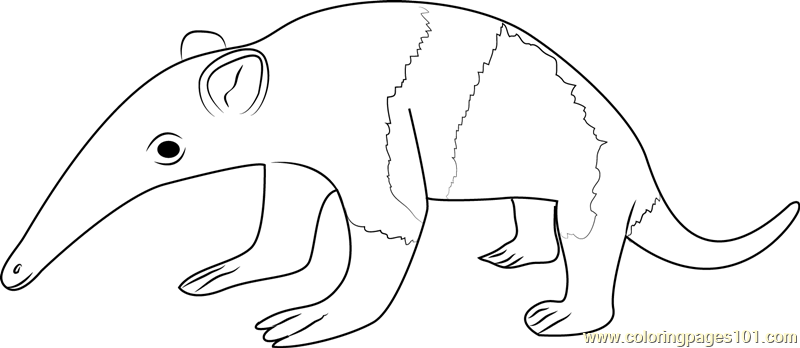Superb Baby Anteater Coloring Page