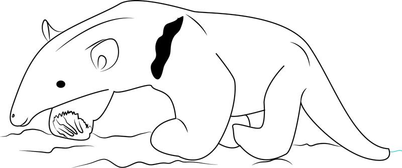 Baby Tamandua Anteater Coloring Page