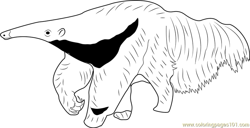 The Mighty Giant Anteater Coloring Page
