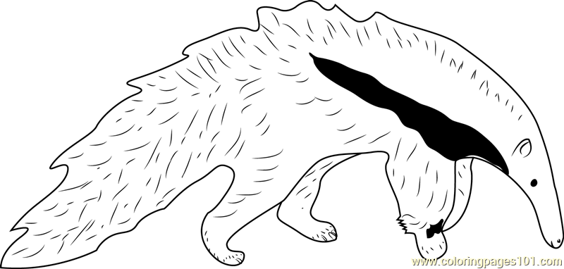 Young Giant Anteater White Black Coloring Page