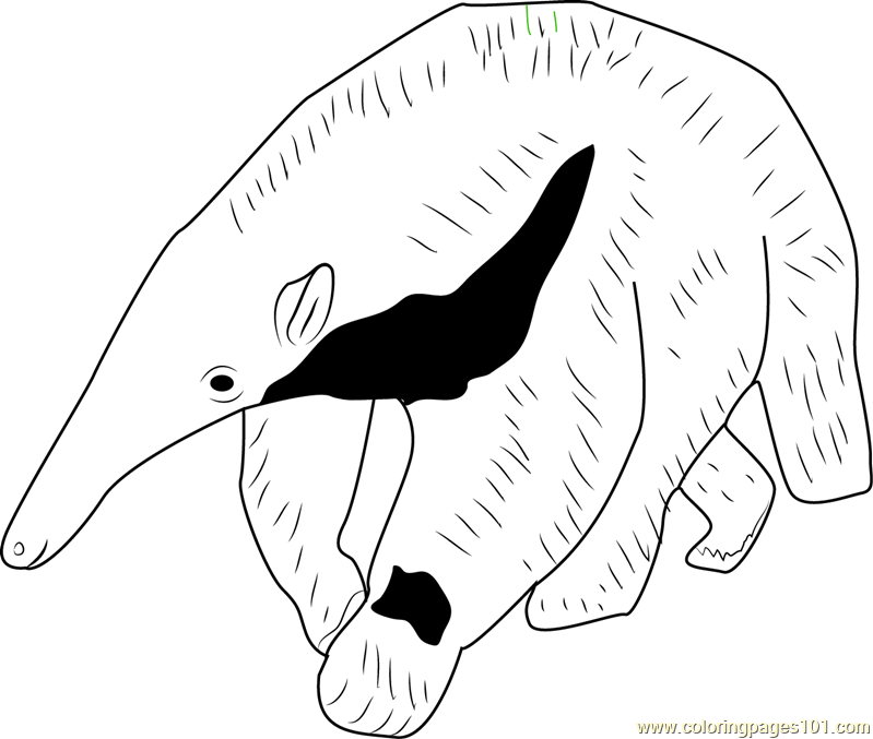 Young Giant Anteater Coloring Page