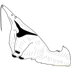 Anteater Searching Ants coloring page
