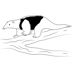 Black Anteater coloring page
