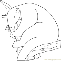 Sleeping Anteater coloring page
