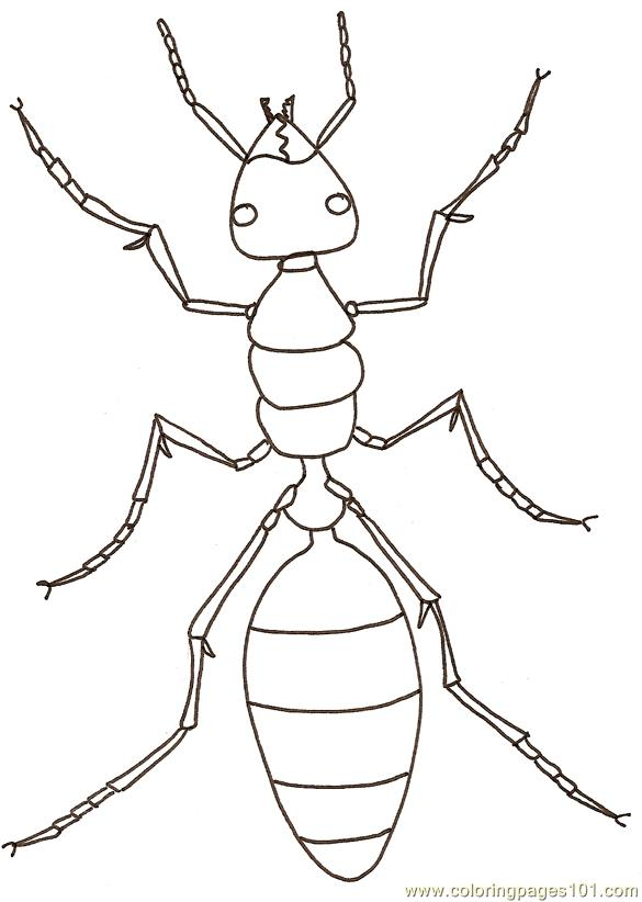 ants coloring page - Ant Coloring Page