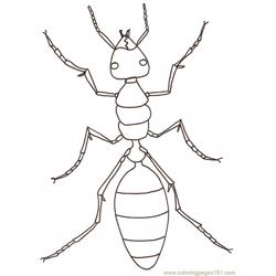 Ants Free Coloring Page for Kids