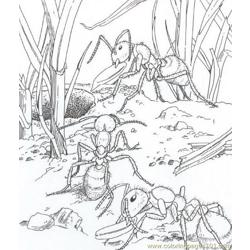 Ants coloring page