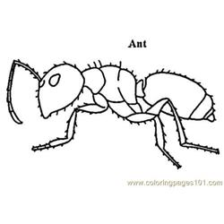 Ant_carpenter