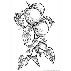 Pages Photo Apricots P1 coloring page