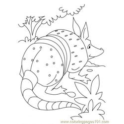 Armadillo Coloring Page1 coloring page