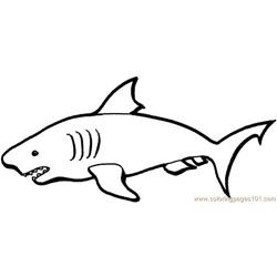 Australian sharks coloring page