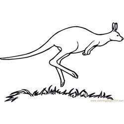 Australian kangaroo Free Coloring Page for Kids
