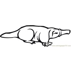 Platypus in australia Free Coloring Page for Kids