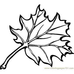 Leaf Free Coloring Page for Kids