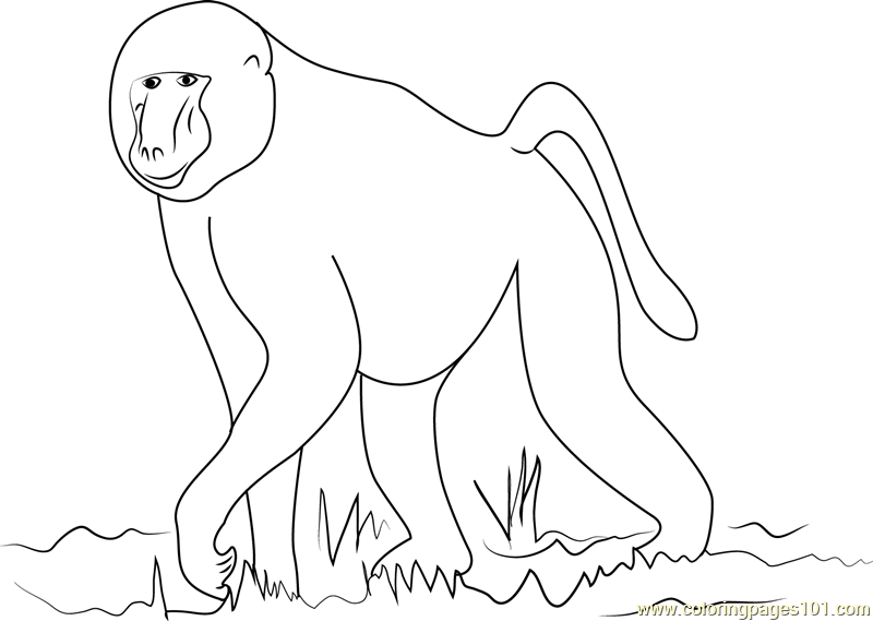 African Baboon Coloring Page Free Baboon Coloring Pages