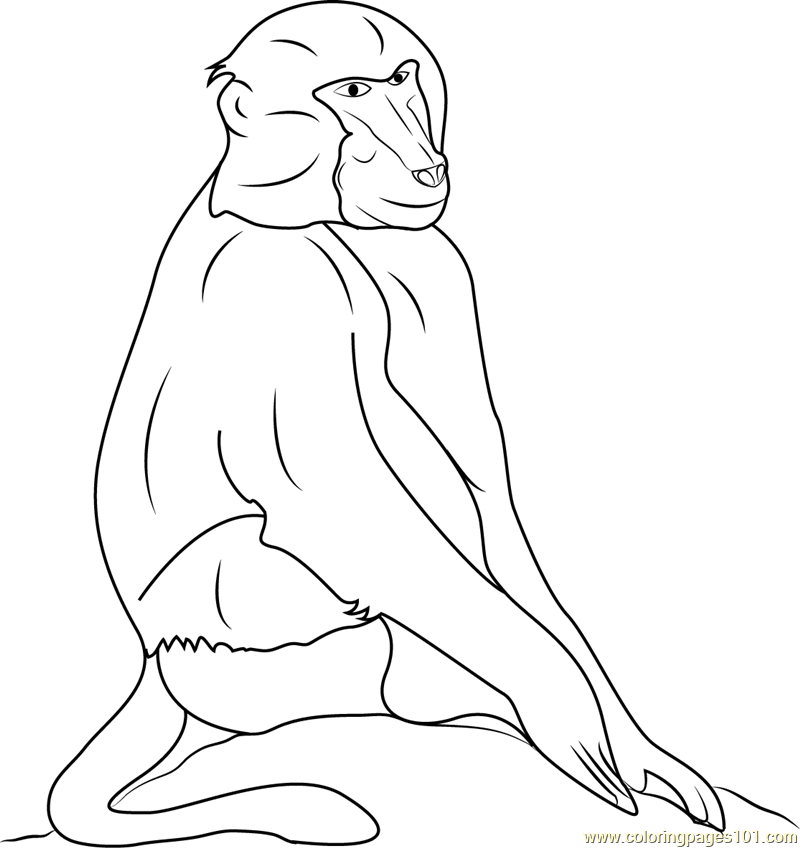 Black Baboons Coloring Page Free Baboon Coloring Pages