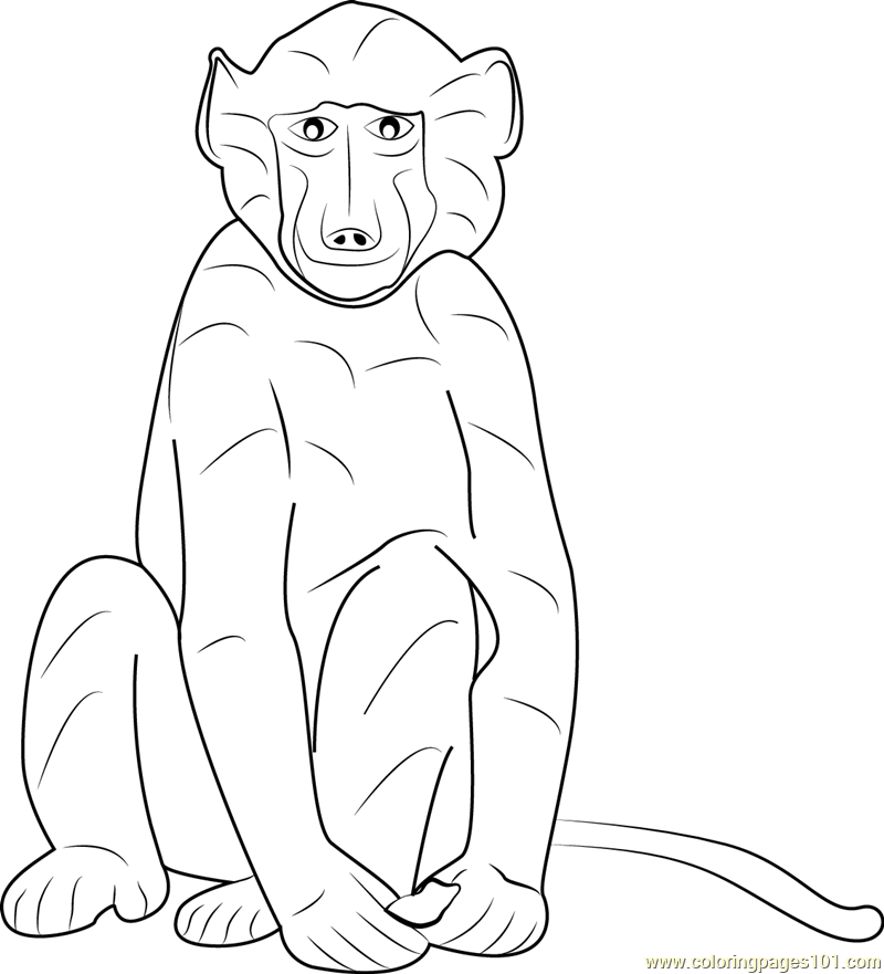 Cape Baboon Coloring Page