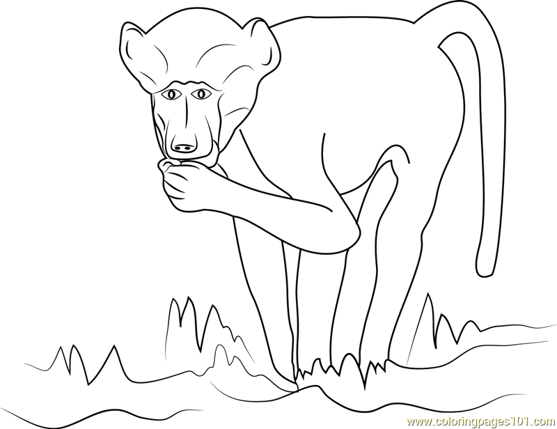 Chacma Baboon Coloring Page - Free Baboon Coloring Pages ...