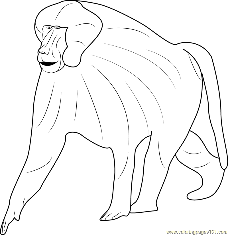 Guinea Baboon Coloring Page Free Baboon Coloring Pages