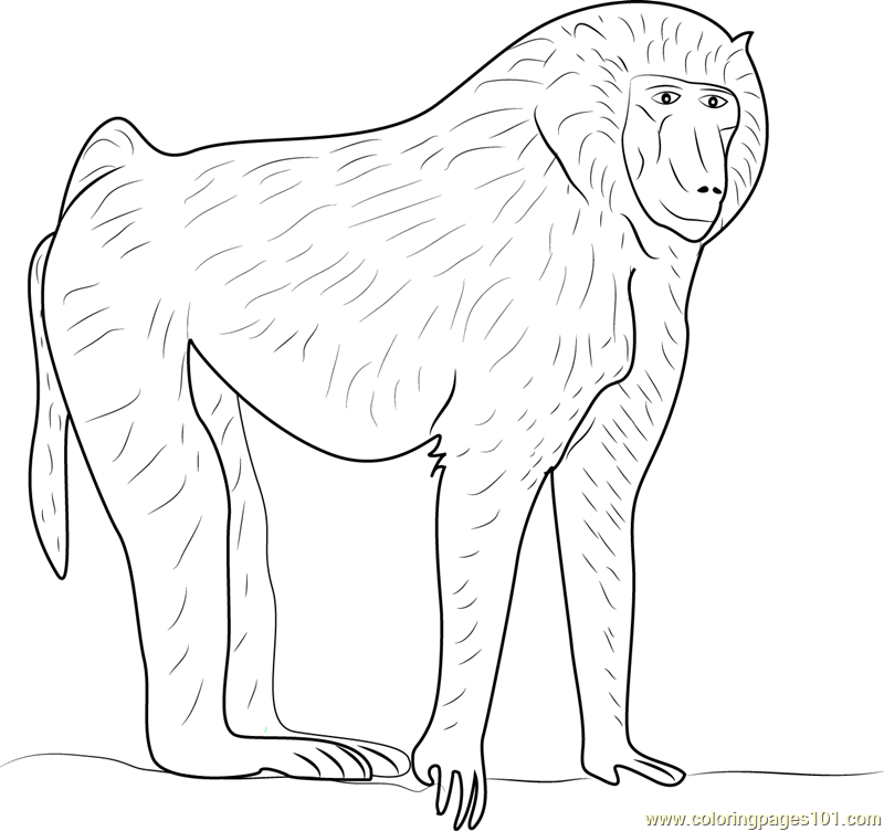 Olive baboon coloring page free baboon coloring pages for Baboon coloring pages