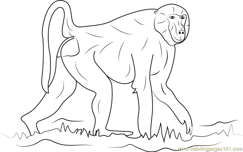 Walking Baboon Coloring Page Free Baboon Coloring Pages