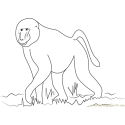 African Baboon Free Coloring Page for Kids