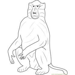 Baboons Free Coloring Page for Kids