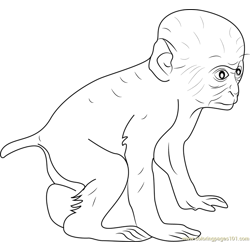 Baby Baboon Free Coloring Page for Kids