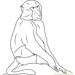 Black Baboons Free Coloring Page for Kids