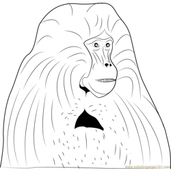 Bleeding-heart Baboon Free Coloring Page for Kids
